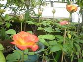 我的花園:花園 007.jpg