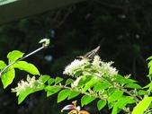 小花園裡蝴蝶好忙....:cccIMG_0095.JPG