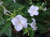 我的花園:zzDSC06263.JPG