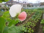 grace花菜園:ccDSC00280.JPG