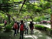 4/23紫藤園:ZZDSC04754.JPG