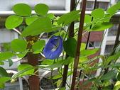 我的花園:055