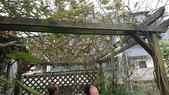 鋁製花架:3-2.JPG