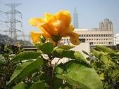 我的花園:bDSC09300