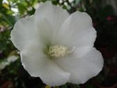 我的花園:16.JPG