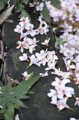 100419帶著相機去流浪:土城桐花公園的四月雪:_DSC1866.JPG