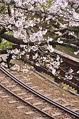 100316悠遊在櫻花的最高殿堂:阿里山櫻花:_DSC0571.JPG