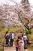 100316悠遊在櫻花的最高殿堂:阿里山櫻花:_DSC0449.JPG