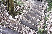 100419帶著相機去流浪:土城桐花公園的四月雪:_DSC1870.JPG