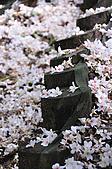 100419帶著相機去流浪:土城桐花公園的四月雪:_DSC1872.JPG