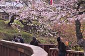 100316悠遊在櫻花的最高殿堂:阿里山櫻花:_DSC0525.JPG