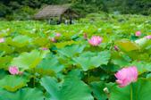 2012-0529台大安坑農場荷花(2012年):DSC_2885.JPG
