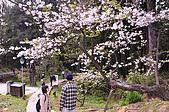 100316悠遊在櫻花的最高殿堂:阿里山櫻花:_DSC0458.JPG