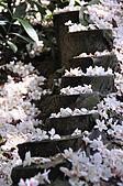 100419帶著相機去流浪:土城桐花公園的四月雪:_DSC1874.JPG