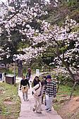 100316悠遊在櫻花的最高殿堂:阿里山櫻花:_DSC0460.JPG