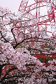 100316悠遊在櫻花的最高殿堂:阿里山櫻花:_DSC0482.JPG