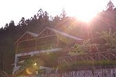 100317悠遊在櫻花的最高殿堂:阿里山櫻花:_DSC0732.JPG