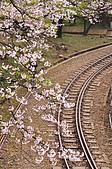 100316悠遊在櫻花的最高殿堂:阿里山櫻花:_DSC0579.JPG