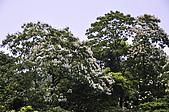 100419帶著相機去流浪:土城桐花公園的四月雪:_DSC1841.JPG