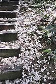 100419帶著相機去流浪:土城桐花公園的四月雪:_DSC1879.JPG