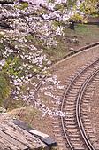 100316悠遊在櫻花的最高殿堂:阿里山櫻花:_DSC0537.JPG