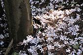 100419帶著相機去流浪:土城桐花公園的四月雪:_DSC1880.JPG
