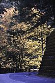 100317悠遊在櫻花的最高殿堂:阿里山櫻花:_DSC0735.JPG