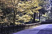 100317悠遊在櫻花的最高殿堂:阿里山櫻花:_DSC0736.JPG