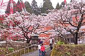 100316悠遊在櫻花的最高殿堂:阿里山櫻花:_DSC0466.JPG