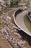 100316悠遊在櫻花的最高殿堂:阿里山櫻花:_DSC0580.JPG