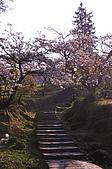 100317悠遊在櫻花的最高殿堂:阿里山櫻花:_DSC0737.JPG