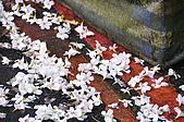 100419帶著相機去流浪:土城桐花公園的四月雪:_DSC1812.JPG