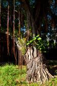2012-1005花蓮行day01-南方澳觀景台、粉鳥林漁港、辣椒博物園、清水斷崖:DSC_0293.jpg