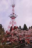 100316悠遊在櫻花的最高殿堂:阿里山櫻花:_DSC0468.JPG