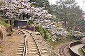 100316悠遊在櫻花的最高殿堂:阿里山櫻花:_DSC0582.JPG