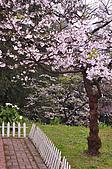 100316悠遊在櫻花的最高殿堂:阿里山櫻花:_DSC0484.JPG