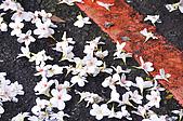100419帶著相機去流浪:土城桐花公園的四月雪:_DSC1813.JPG