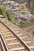 100316悠遊在櫻花的最高殿堂:阿里山櫻花:_DSC0583.JPG