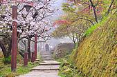 100316悠遊在櫻花的最高殿堂:阿里山櫻花:_DSC0657.JPG