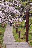 100316悠遊在櫻花的最高殿堂:阿里山櫻花:_DSC0658.JPG