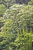 100419帶著相機去流浪:土城桐花公園的四月雪:_DSC1815.JPG