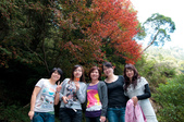 2012-1215大雪山賞楓行(雲海落日、星空):DSC_5326.jpg