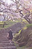 100317悠遊在櫻花的最高殿堂:阿里山櫻花:_DSC0739.JPG