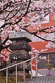 100316悠遊在櫻花的最高殿堂:阿里山櫻花:_DSC0469.JPG