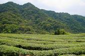 2013-0416石碇千島湖八卦茶園:DSC_0294.jpg