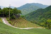 2013-0416石碇千島湖八卦茶園:DSC_0295.jpg