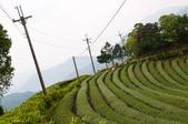 2013-0416石碇千島湖八卦茶園:DSC_0297.jpg