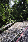 100419帶著相機去流浪:土城桐花公園的四月雪:_DSC1770.JPG