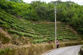 2013-0416石碇千島湖八卦茶園:DSC_0298.jpg