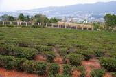 2012-1111苗栗日新島、九湖農場、 棗莊:DSC_3828.jpg